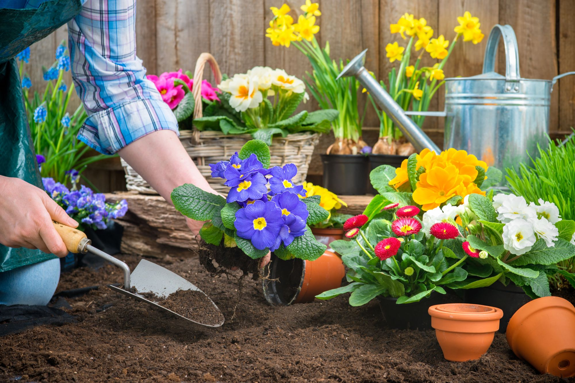 Realizacja projektu ogrodu